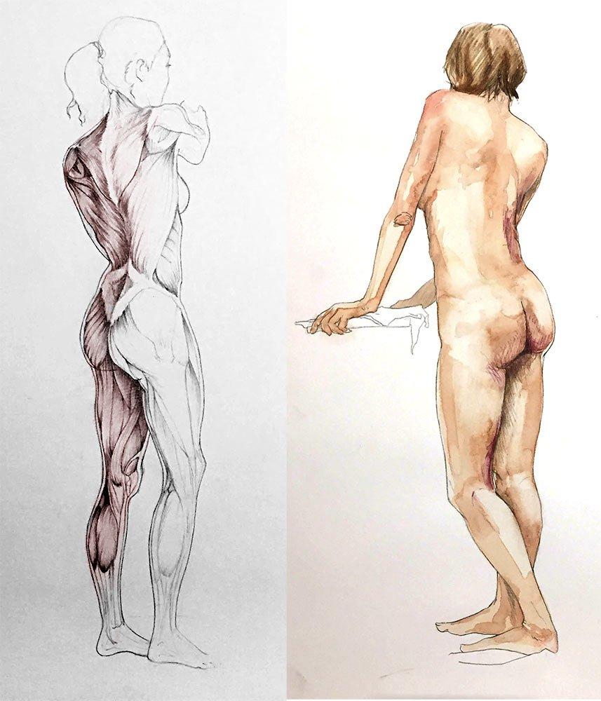 5 étapes pour apprendre l'anatomie artistique - Le Carnet Digital